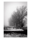 Gate By The Trees Photographic Print by Kimberly Adams