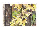 Autumn Leaves Giclee Print by Karin Quinn