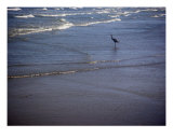 Being One With The Gulf - Watching Photographic Print by Lucyna A. M. Green