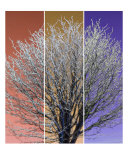 Ice Tree Three Photographic Print by Peter Valente