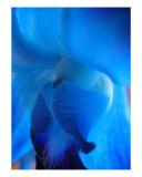 Bird Blue Photographic Print by Sarah Hall