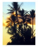 Paradise Sunset Photographic Print by Donald Bitterman
