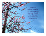 Cherry Tree Blossoms With Scriptures Photographic Print by Maria Athanasiou