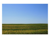 Soybean Field Photographic Print by Laura Gerwin