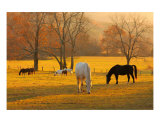 Valley Of Horses- Cades Cove Photographic Print by Anna Miller