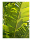 Banana Leaves Photographic Print by Florene Welebny