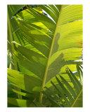 Banana Leaves Photographic Print by Florene Welebny