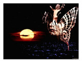 Butterfly During The Nights Photographic Print by Sonia González Montenegro