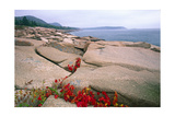 Otter Point, Acadia National Park, Maine Photographic Print by George Oze