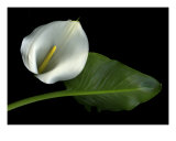 Calla Lily Photographic Print by Christian Slanec