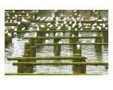 Bird Conference Photographic Print by Wendy Traxler