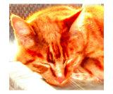 Schlafende Katze Fotodruck von Peter Valente