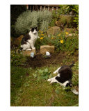 Two Cats In The Garden Photographic Print by Jean Fitzhugh