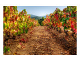 Colorful Autumn Vineyard Landscape - Provence Photographic Print by Patrick Morand