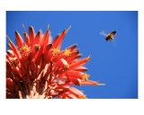 Buzz Photographic Print by Laura Gerwin