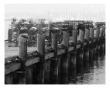 Dock At San Diego Photographic Print by Wendy Traxler