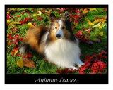 Autumn Leaves Photographic Print by Karen Walker
