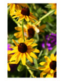 Yellow Cone Flowers Photographic Print by Scott Schofield
