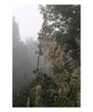 Grasses And Mist Photographic Print by Nadine Rippelmeyer