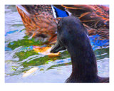 Duck 3 Photographic Print by Andrea Kaye