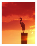 Against A Red Sky Photographic Print by Florene Welebny