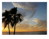 Tropical Heaven Photographic Print by Florene Welebny