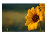 Soaking In The Morning Sun Photographic Print by Derek Johnson