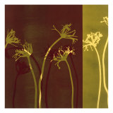 Stems XI Prints by Mary Margaret Briggs