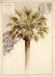 Palmier I Prints by Pascal Cessou