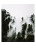 Fog and Redwoods Giclee Print by Jill Tishman