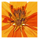 Pressed Flower Abstract no. 1 Giclee Print by Shams Rasheed