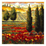 Tuscany in Bloom III Giclee Print by J.m. Steele