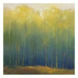 Bosques profundos en verano Lámina por Teri Jonas