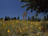 Ancient Roman Columned Ruins Amid Wildflowers in Sicily, Italy Photographic Print by Marcia Kebbon