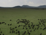 Wildebeest Migration across the Savannah, Africa Photographic Print by Randy Olson