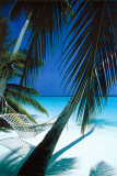 Palm View Hammock Posters