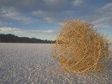 Tumbleweed on the Bonneville Salt Flats, Utah Photographic Print by John Burcham