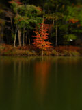 Reflections of Trees in a Lake in the Fall, Pocono Mountains, Pennsylvania Photographic Print by Raul Touzon