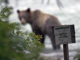 Alaskan Brown Bear Fishing for Salmon, Southeast Alaska Lámina fotográfica por Quinton, Michael S.