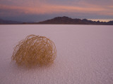 Tumbleweed on the Bonneville Salt Flats, Utah Photographic Print by John Burcham