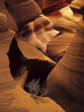 Eroded Sandstone and a Tumbleweed Branch in a Slot Canyon Photographic Print by Ralph Lee Hopkins