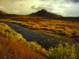 River Flows Through a Field in Autumn Color, Tombstone Territorial Park, Yukon Territory, Canada Photographic Print by Nick Norman