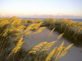 Sunlight Strikes Sea Oats on Dunes Near the Atlantic Ocean Photographic Print by Skip Brown