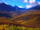 Valley Blooms with Autumn Colors, Tombstone Territorial Park, Yukon Territory, Canada Photographic Print by Nick Norman
