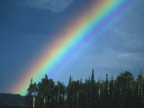Rainbow over Forest, British Columbia, Canada Photographic Print by Nick Norman