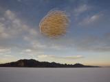 Tumbleweed in Mid Air over the Bonneville Salt Flats, Utah Photographic Print by John Burcham