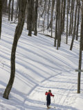 Little Boy Country Skiing on a Trail Through Snowy Woods, Canaan Valley, West Virginia Photographic Print by Skip Brown
