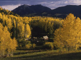 Farm Nestled Among Aspen Trees in Fall Colors and Mountains, Telluride, Colorado Fotografie-Druck von Annie Griffiths Belt