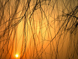 Sunset Peers Through the Branches of a Chinese Weeping Willow Tree, Beijing, China Photographic Print by  xPacifica