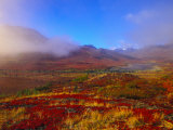 Field of Vivid Autumn Colors, Tombstone Territorial Park, Yukon Territory, Canada Photographic Print by Nick Norman